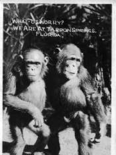 """Go to Postcards Various Alfred E. Neuman """"What Me worry?"""" Monkey"""